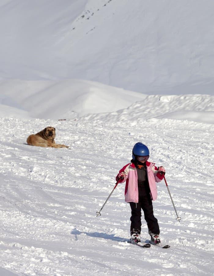 小的滑雪者和狗在滑雪倾斜太阳冬日 免版税库存照片