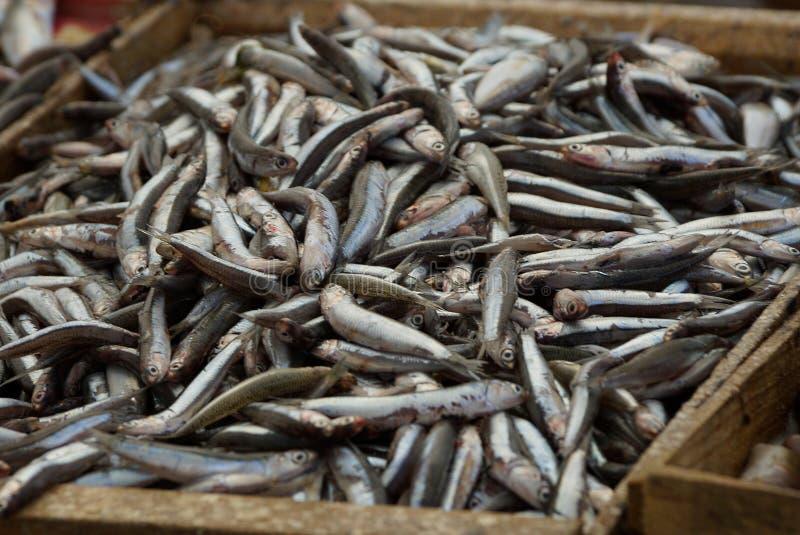 小盐味的海鱼自然纹理在堆的在箱子 免版税库存照片