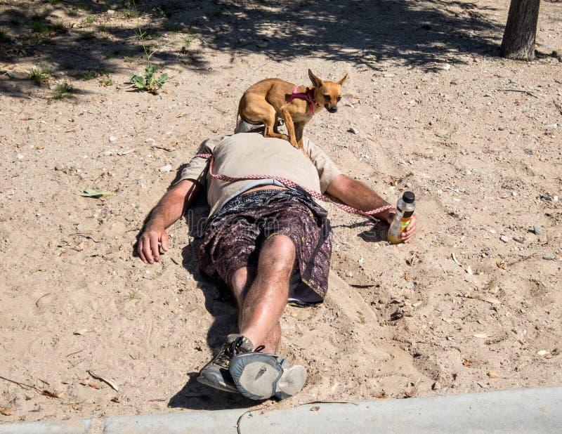 小睡在与奇瓦瓦狗的海滩 免版税库存图片