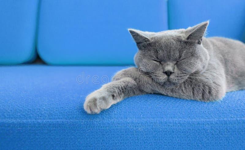小睡的猫 库存图片