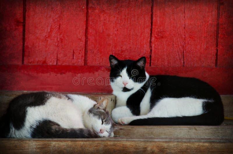 小睡谷仓的猫 图库摄影
