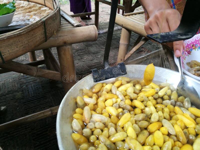 小组丝绸案件蠕虫茧筑巢颜色黄色和白色 茧桑蚕为做准备做螺纹 库存照片