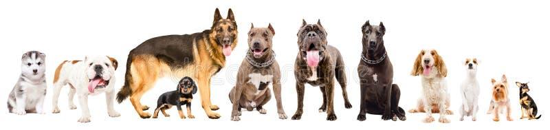 小组十一条逗人喜爱的狗另外品种 图库摄影