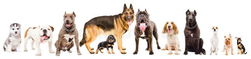 小组十一条逗人喜爱的狗 库存照片