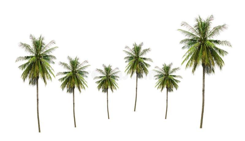 小组可可椰子树热带水果,在白色背景隔绝的食物成份 库存图片