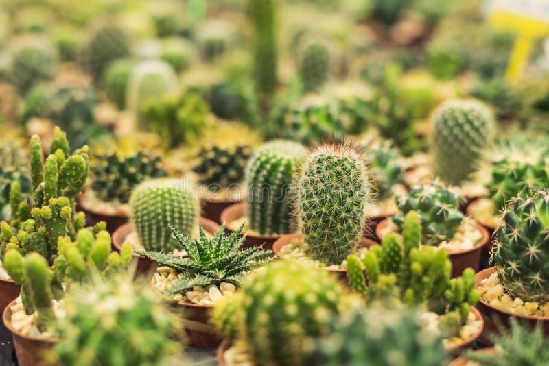 小组各种各样的仙人掌植物 免版税库存照片