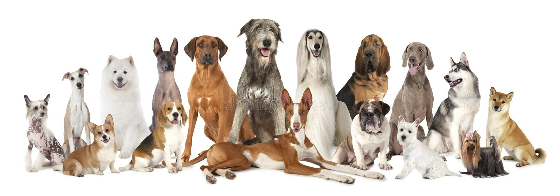 小组各种各样的种类纯血统狗 库存图片