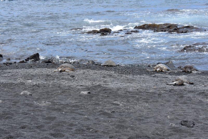 小组在一黑沙滩的海龟 库存图片