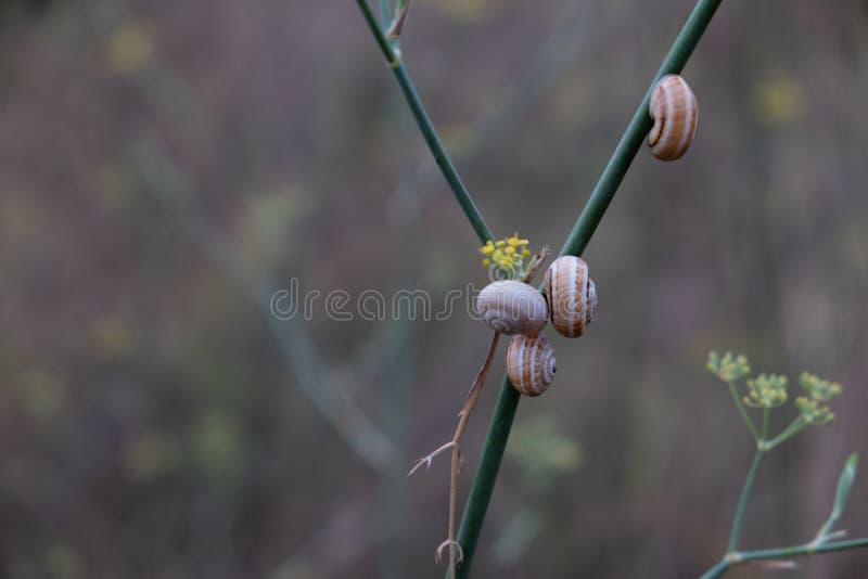 小组在同一个灌木分支的蜗牛 库存照片