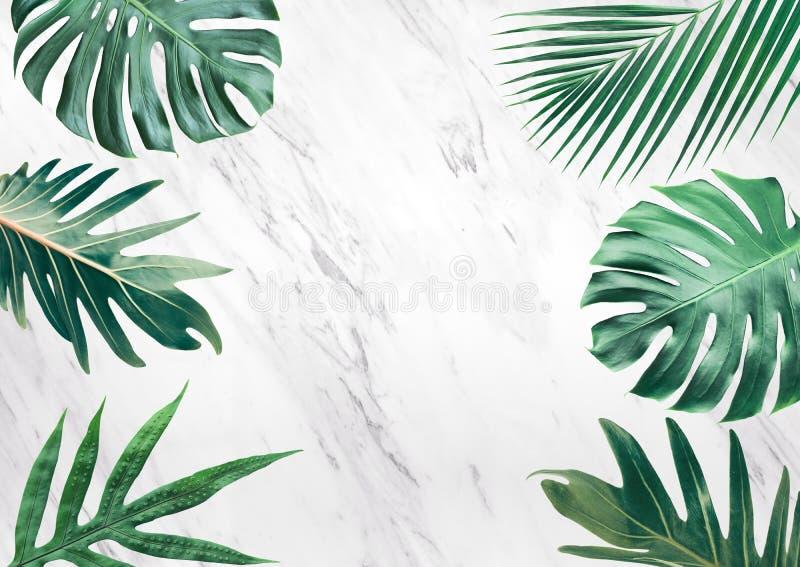 小组在大理石背景的热带叶子 复制空间 自然 免版税库存图片