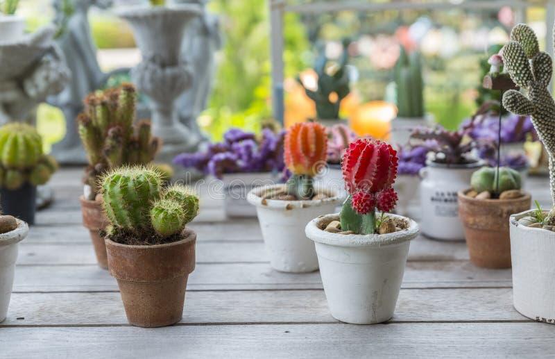 小组在木桌上的仙人掌植物 免版税库存图片