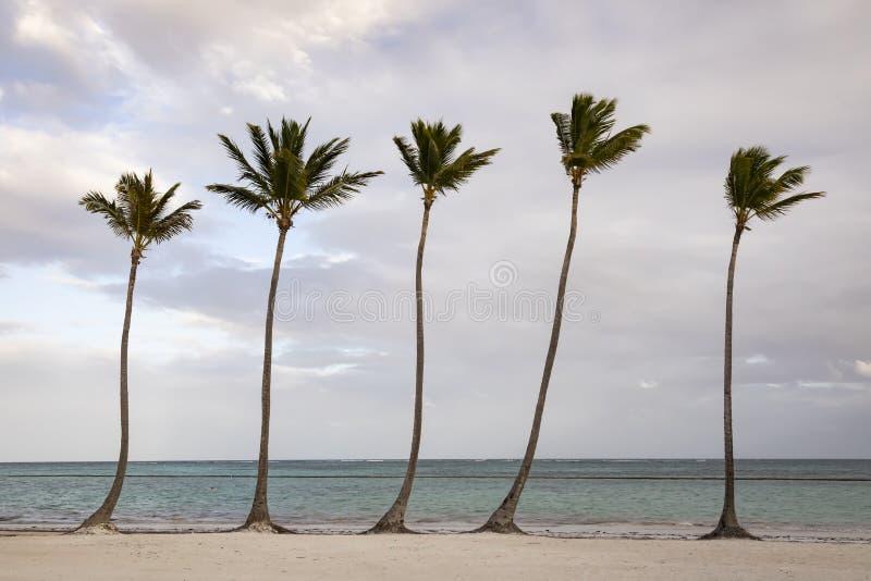 小组在海滩的棕榈树在多米尼加共和国 库存照片