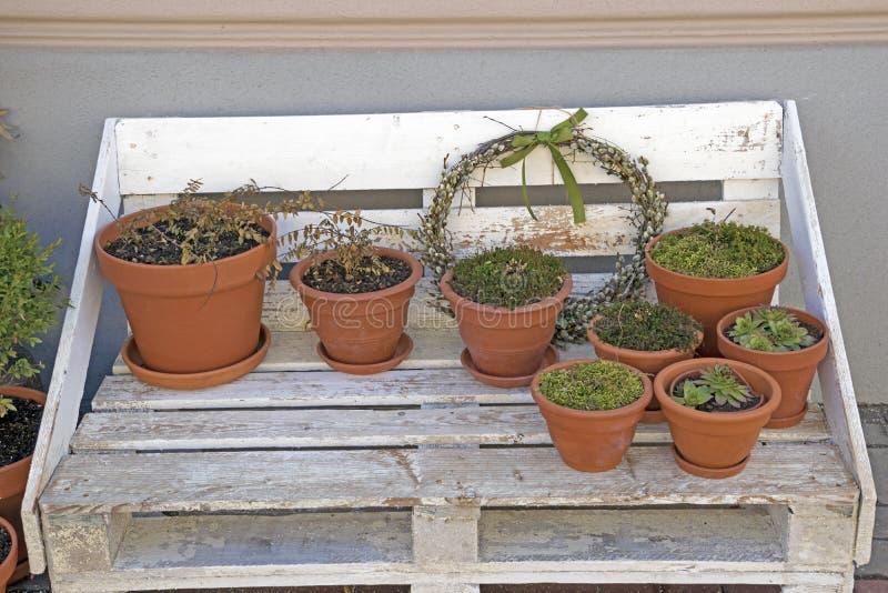 小组在生长绿色花的棕色花盆在老长木凳 图库摄影