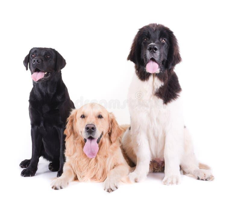 小组在白色背景前面的另外品种狗 免版税库存照片