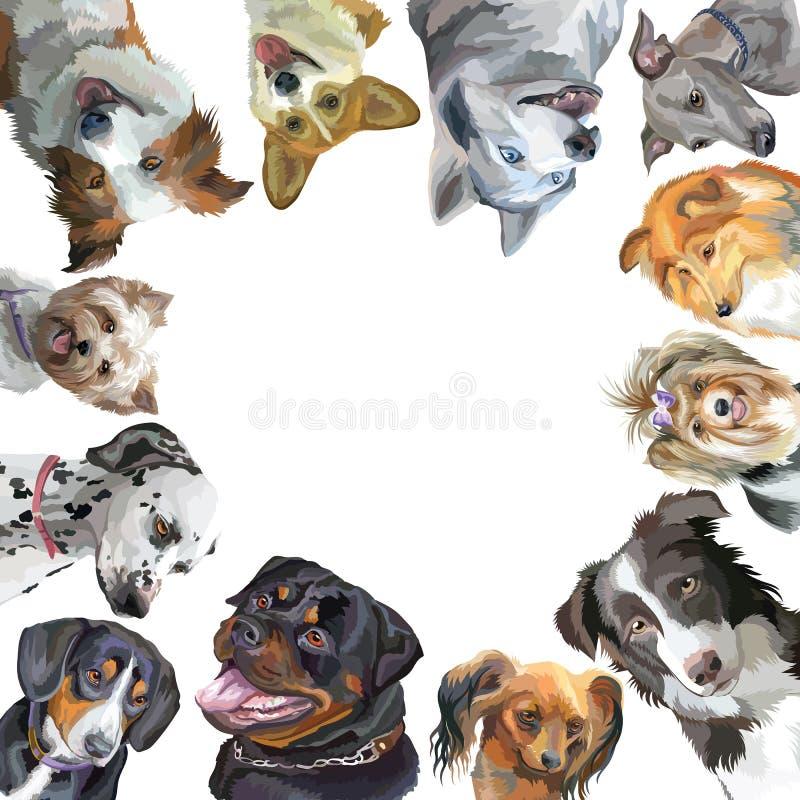 小组在白色backg隔绝的正方形的狗不同的品种 向量例证