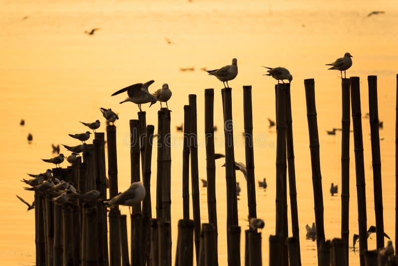 小组在竹杆的海鸥在暮色日落的海 免版税库存图片