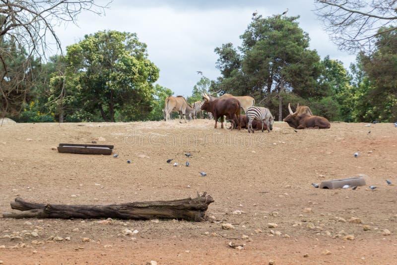 小组大草原草食动物动物 图库摄影