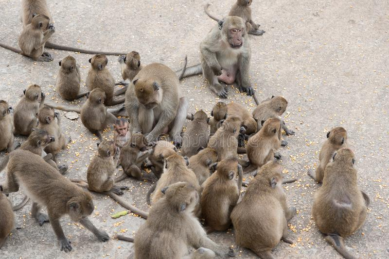 小组家庭猴子 库存图片