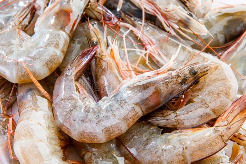 小组新鲜的虾大虾海鲜红色皮肤大虾vannamei 库存照片