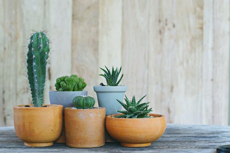 小组木墙壁背景的,多汁概念,拷贝空间一点仙人掌盆栽植物 库存照片