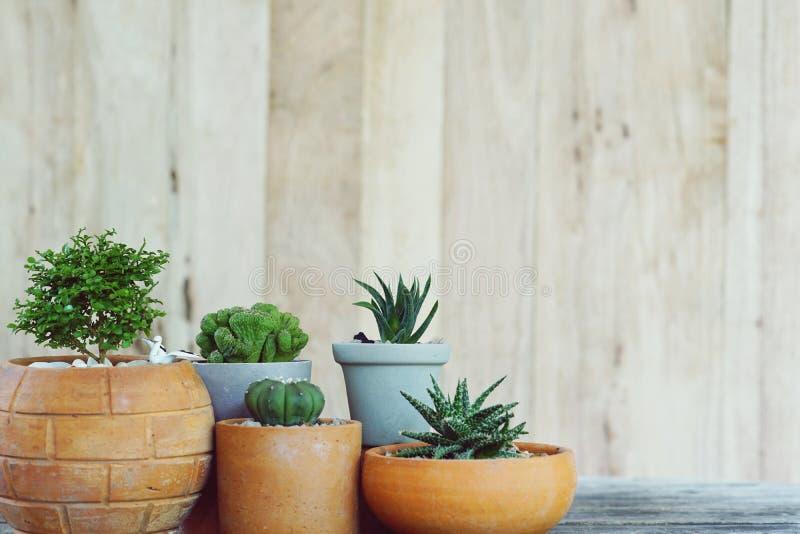 小组木墙壁背景的,多汁概念,拷贝空间一点仙人掌盆栽植物 图库摄影
