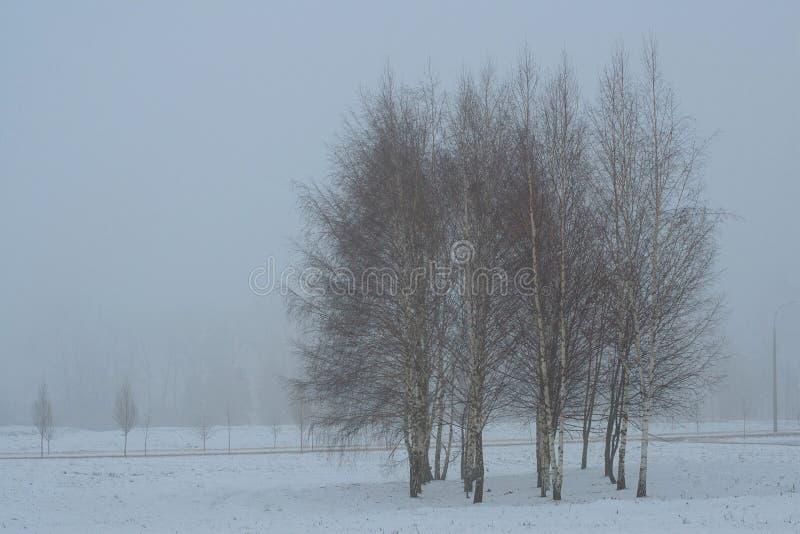 小组桦树在有雾的冬天早晨 免版税库存图片