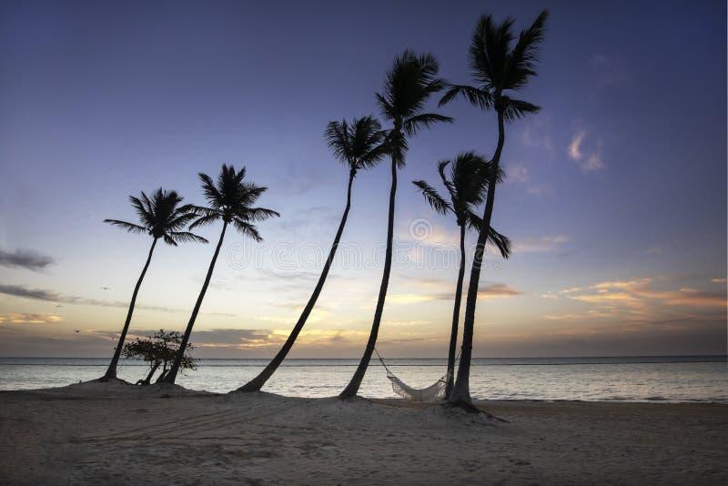 小组棕榈树和吊床在海滩在加勒比 免版税库存图片