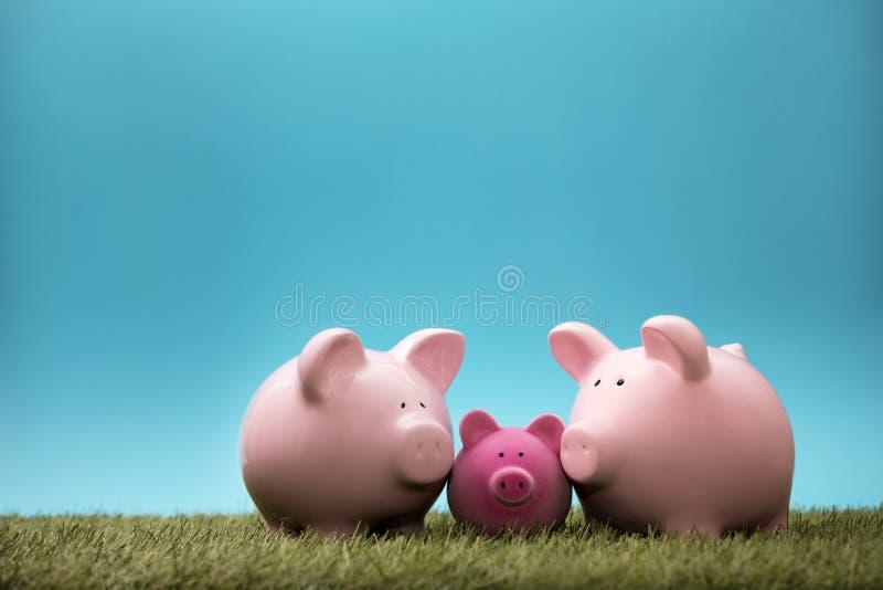 小组绿草的存钱罐 库存照片