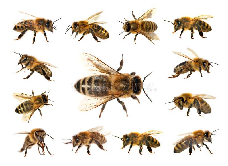 白色蜂或蜂蜜在蜜蜂背景,鲸鱼蜂儿童怎么画小组图片