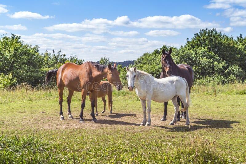 小组马以各种各样的颜色 图库摄影