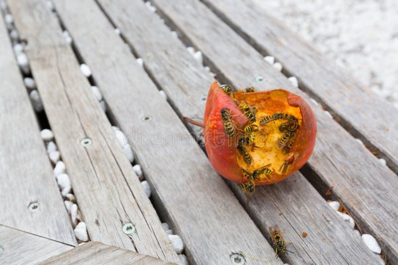 小组黄色夹克共同的黄蜂欧洲黄蜂吃新鲜 库存照片