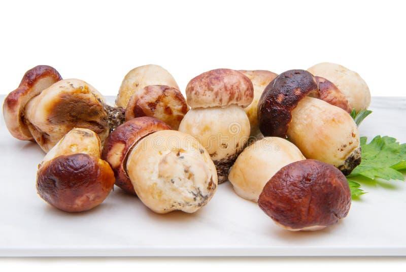 小组porcini在大理石砧板采蘑菇 库存图片
