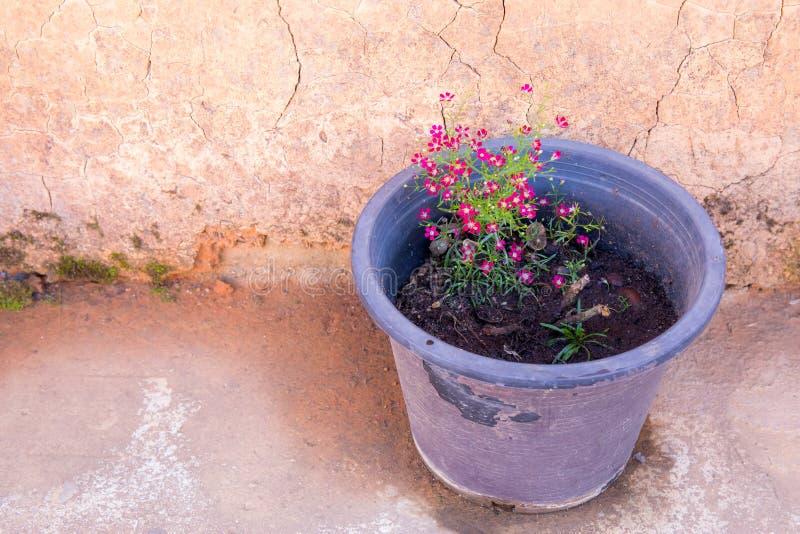 小罐相当桃红色或红色花 库存照片
