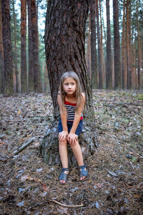 小美丽的女孩坐一个树桩在杉木森林里 免版税图库摄影