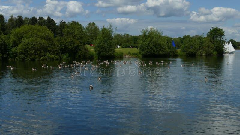 小船、野生生物和湖 免版税库存图片