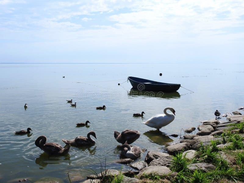 小船和鸟在湖支持,立陶宛 免版税库存图片