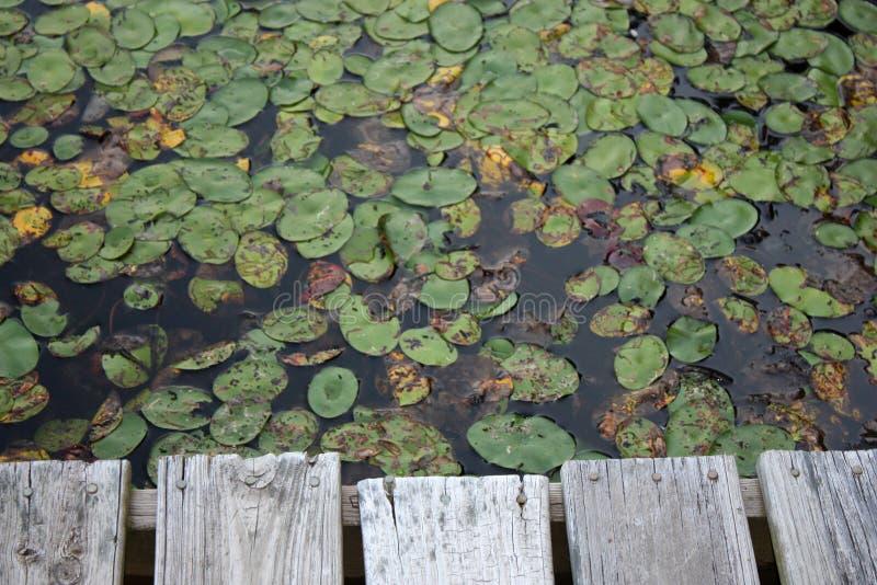 小船小码头的池塘 免版税库存照片