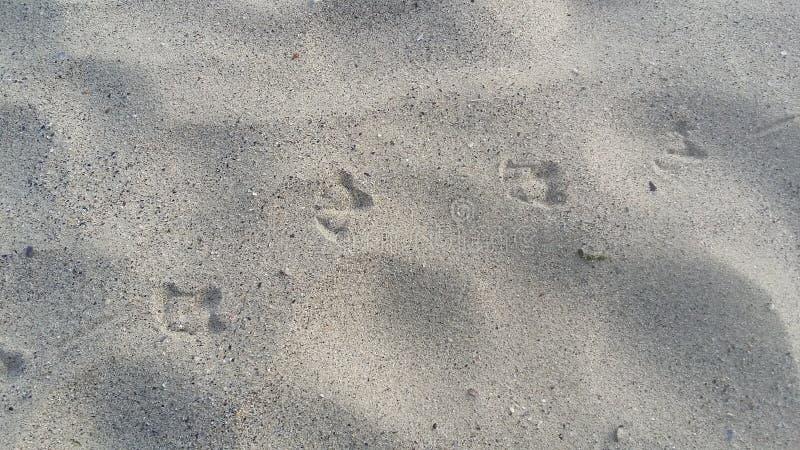 小船旅行,在沙子的脚印在度假者以后 新鲜的海洋气流 免版税图库摄影