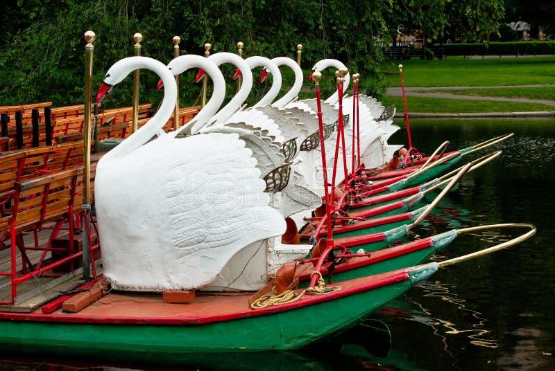 小船波士顿庭院公共其它天鹅 库存照片