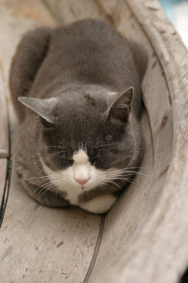 小船猫休眠 免版税图库摄影