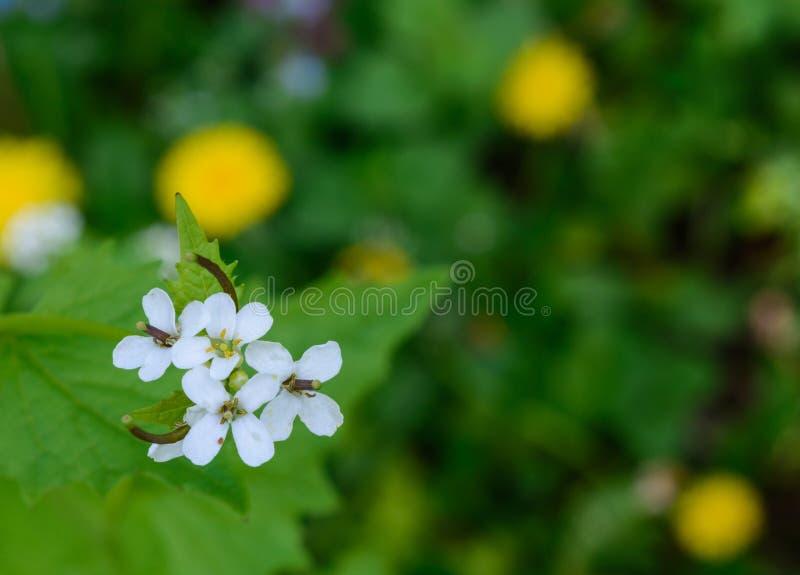 小花在公园 免版税库存照片