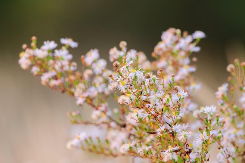 小花在黄昏的草甸 免版税库存照片