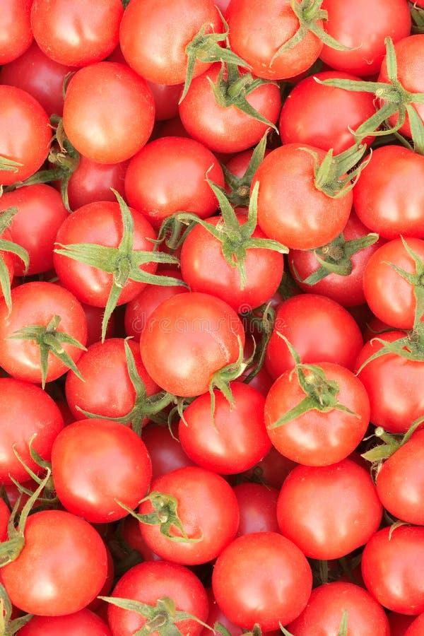 小蕃茄 图库摄影