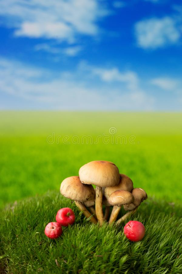 小蘑菇和果子在草甸 库存照片