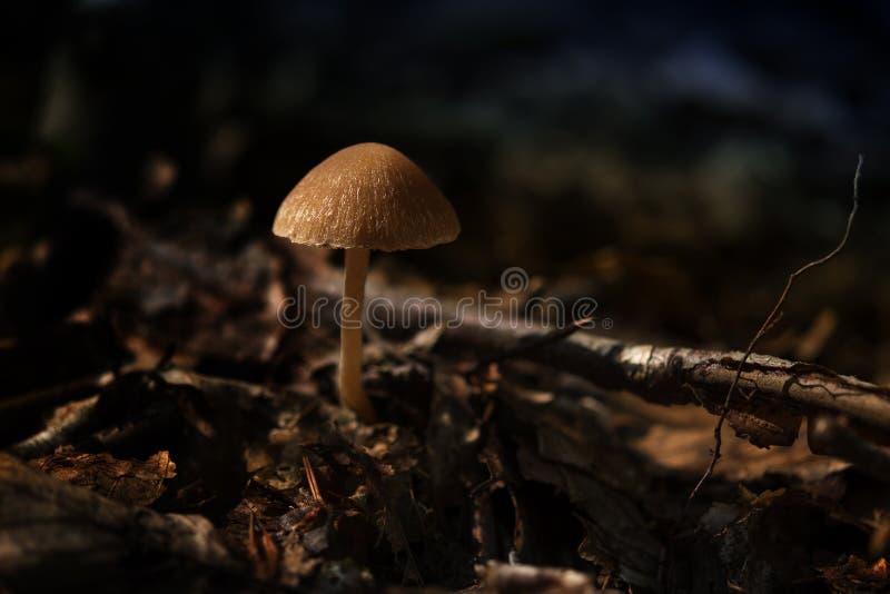 小蘑菇在秋天森林里,关闭与拷贝空间 库存照片
