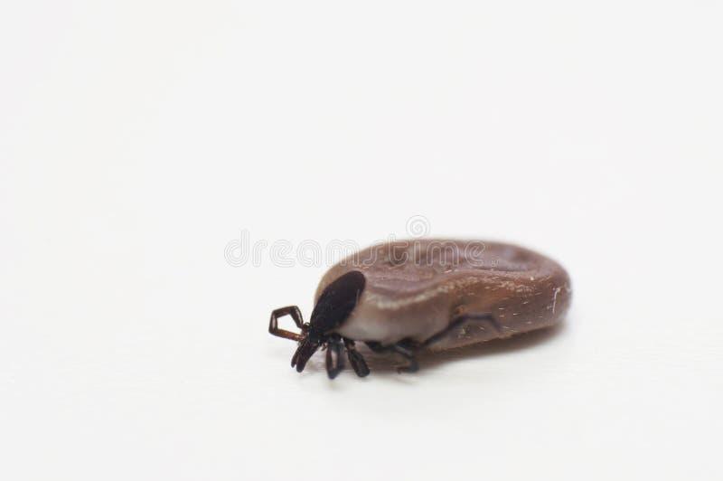 小蜘蛛 免版税库存照片