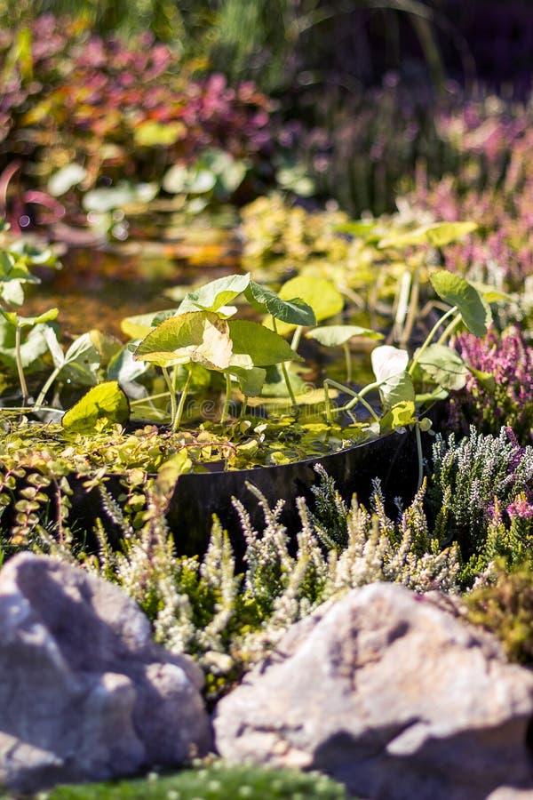 小装饰池塘在庭院里,关闭,垂直 库存图片