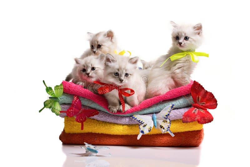 小猫、毛巾和butterflys 库存图片