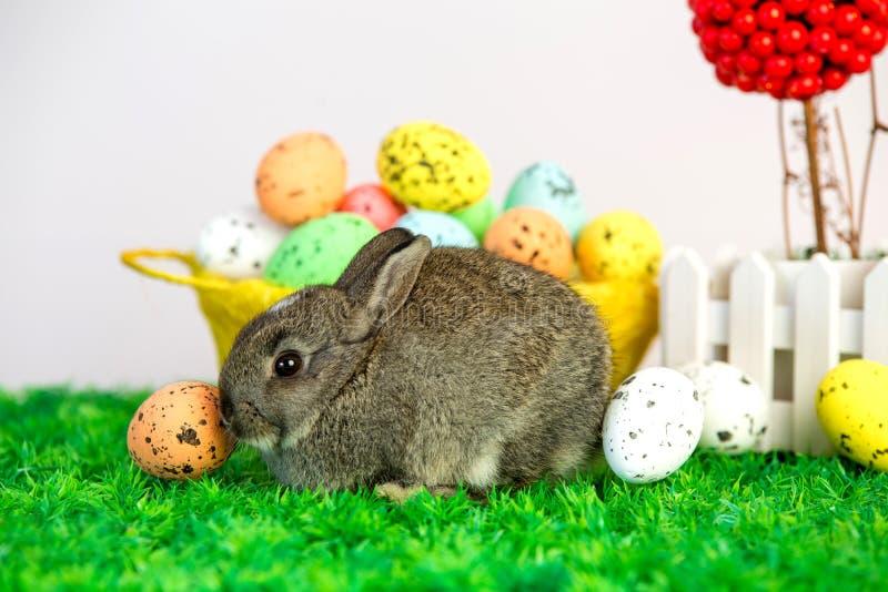 小逗人喜爱的兔宝宝用复活节彩蛋 免版税库存照片