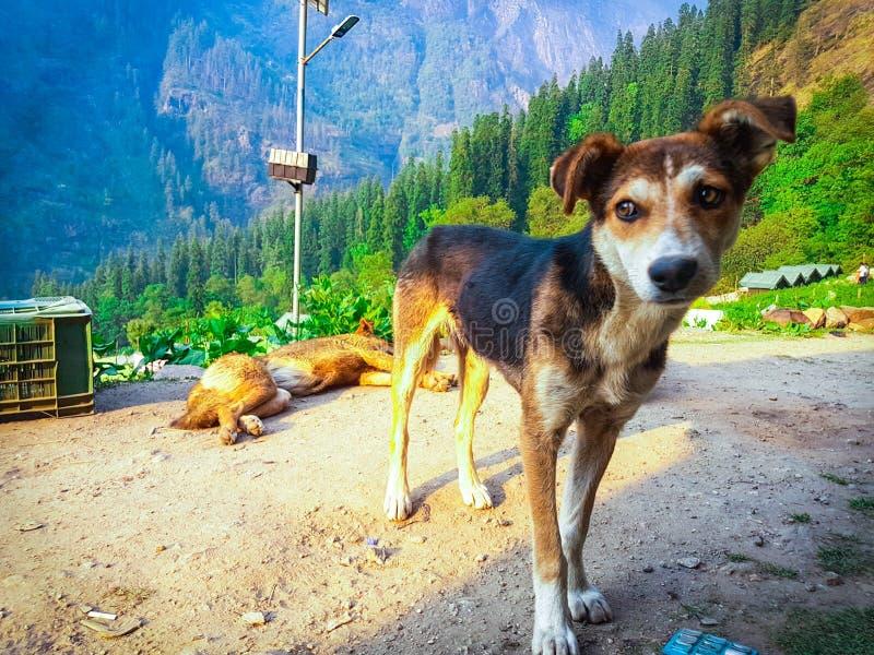 小逗人喜爱的狗 免版税图库摄影